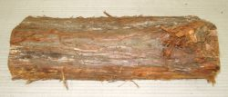 Le010 Eastern White Cedar, Thuya Log Cutoff 340 x 120 x 50 mm