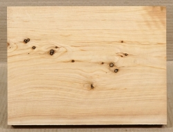 Le012 Eastern White Cedar, Thuya 267 x 198 x 29 mm