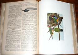 Die gefiederte Welt, Dr. Karl Russ 1901