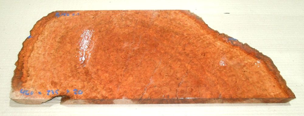 Ppf056 Peppermint Tree Burl 460 x 235 x 20 mm
