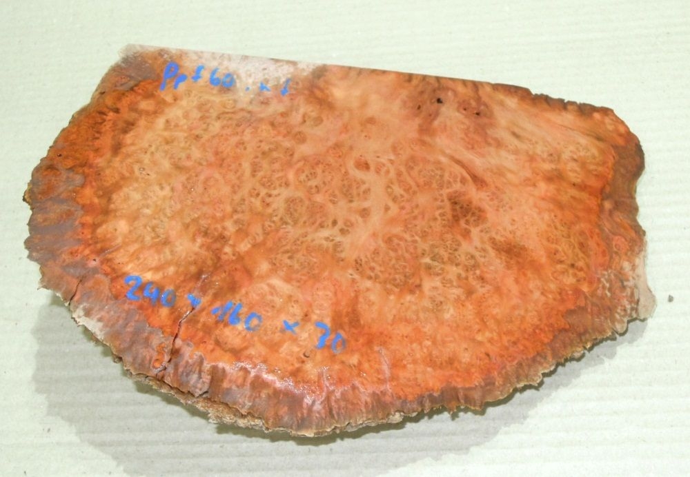 Ppf060 Peppermint Tree Burl 240 x 160 x 30 mm