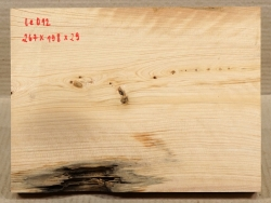 Le012 Lebensbaum, Thuja 267 x 198 x 29 mm