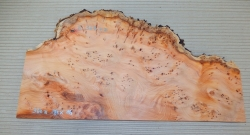 Ei364 Yew Burl Wood AAA 360 x 180 x 15 mm