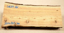 Sd021 Sea-Buckthorn Log Cutoff 200 x 80 x 40 mm